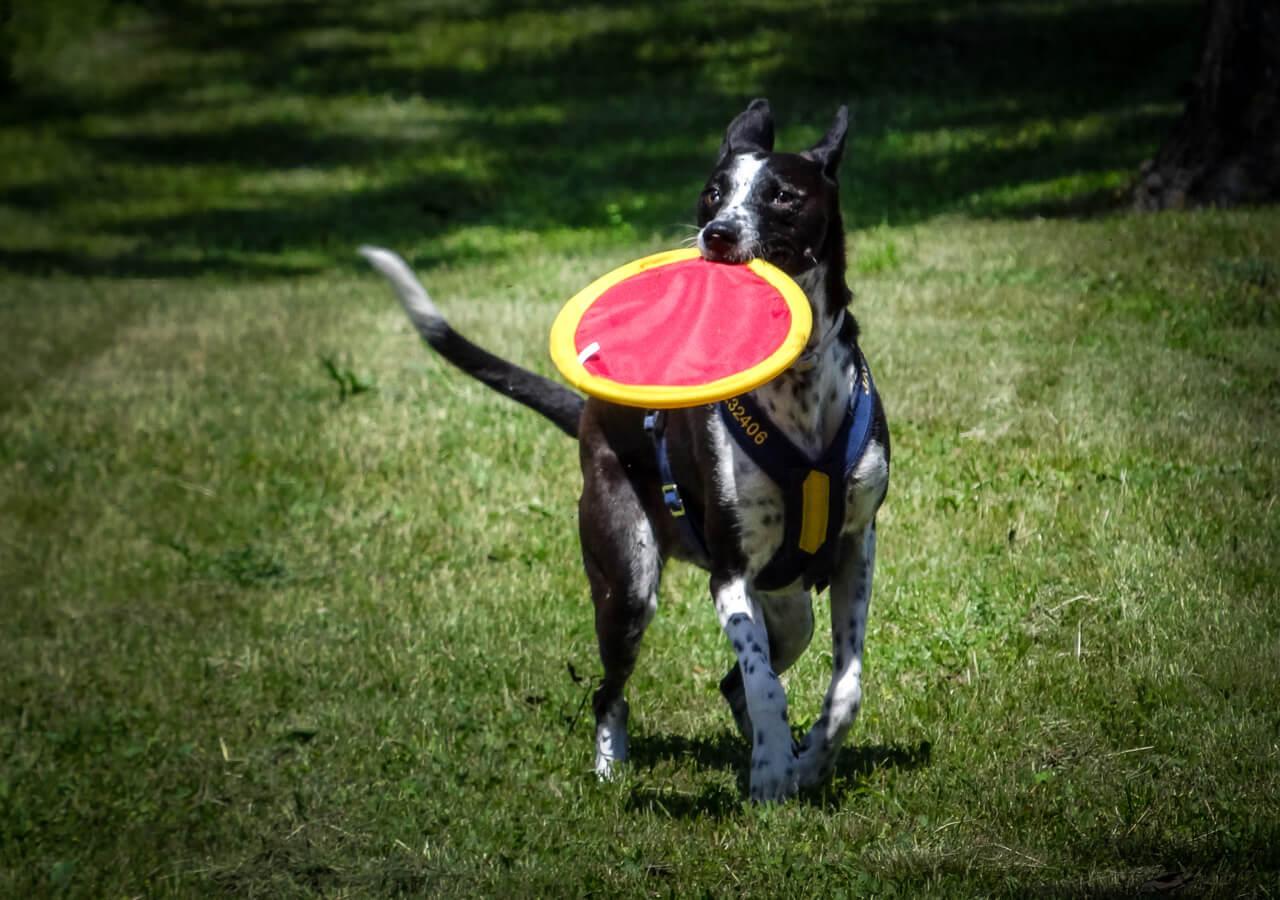 oh-my-dog-will-spielen-hoch_